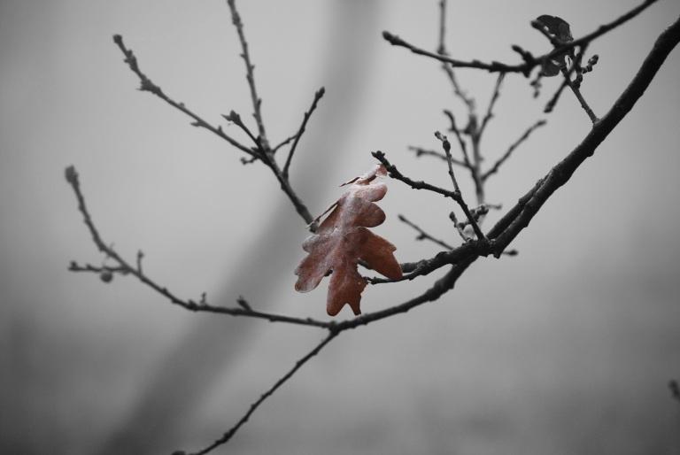 winter-672311